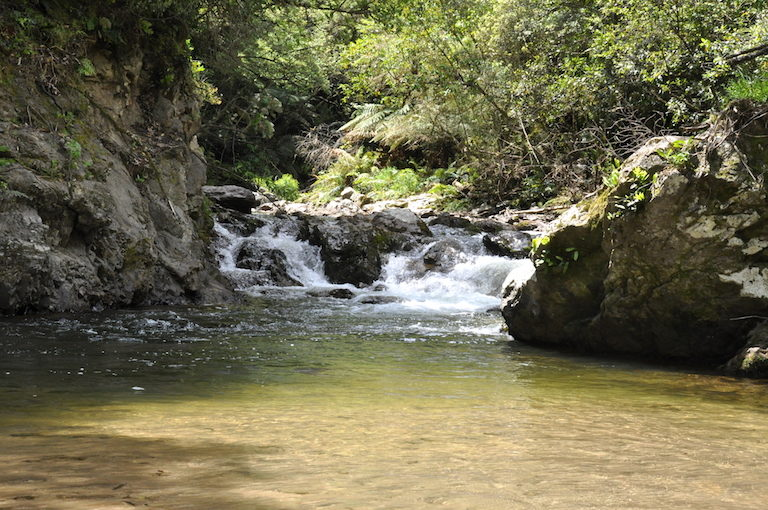 "The road to Tuawhenua traces a branch of the Whakatāne river. For local elders, ""the language or sound of the river"" is a key indicator of forest health. Image by Monica Evans for Mongabay."