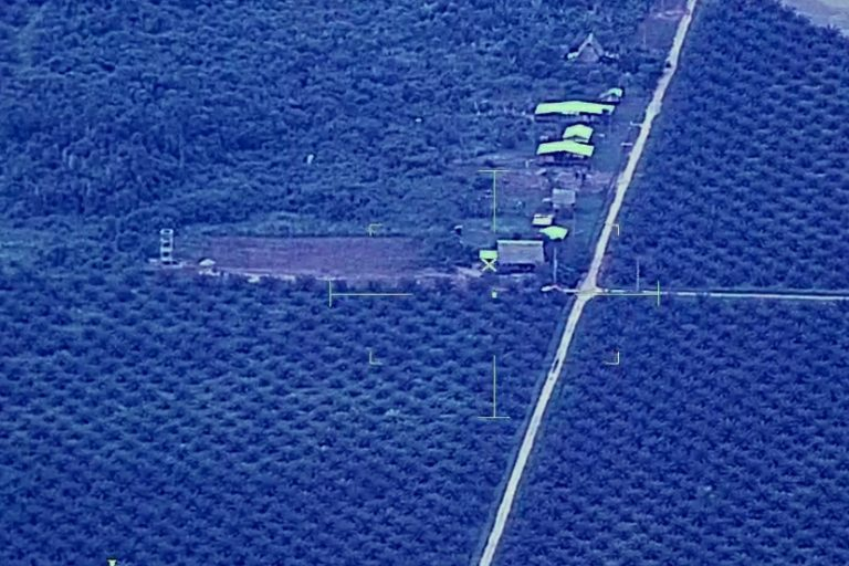 Palm oil crops on the border between the towns of Nueva Requena and Curimaná. Image courtesy of the Center for Amazonian and National Vigilance (CEVAN).