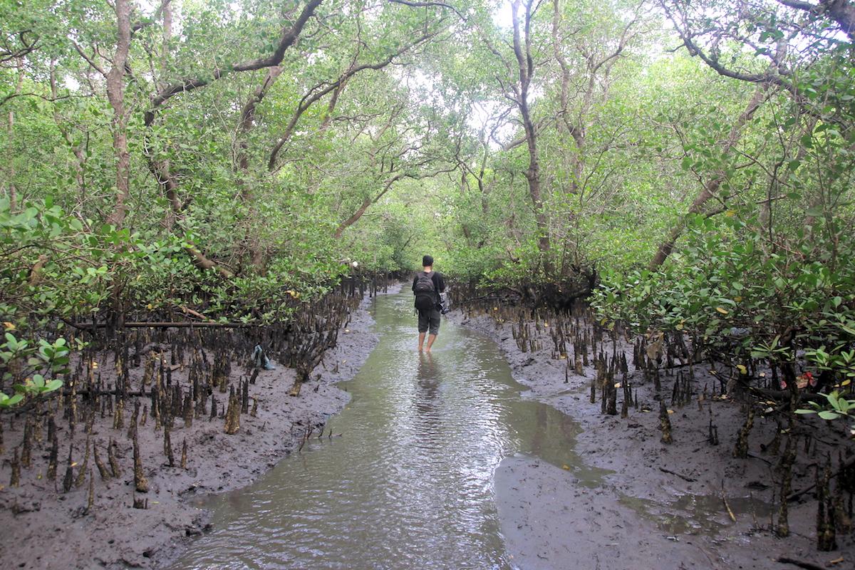 Hutan-bakau-di-Teluk-Benoa-akan-berubah-fungsi-dari-konservasi-ke-kawasan-pemanfaatan.-Foto-Anton-Muhajir