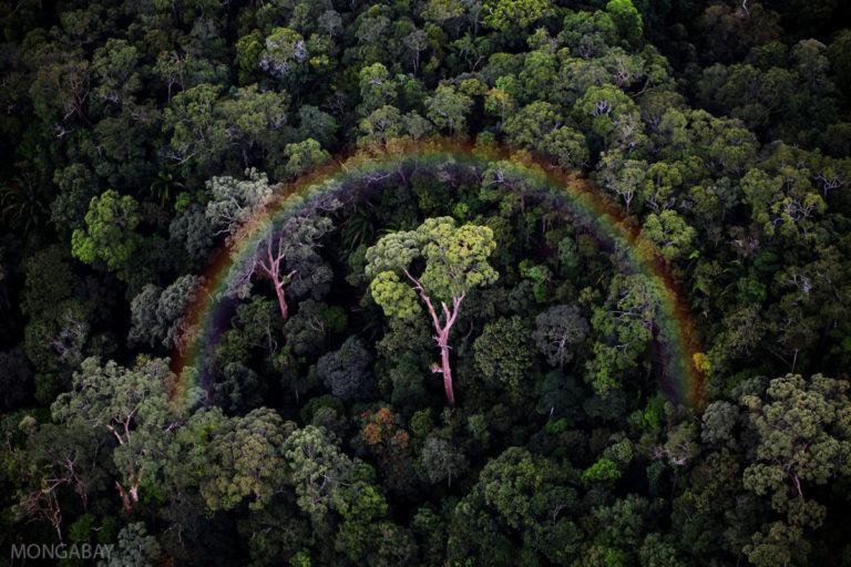 A rainbow over the rainforest in Sabah. Image by Rhett A. Butler/Mongabay.
