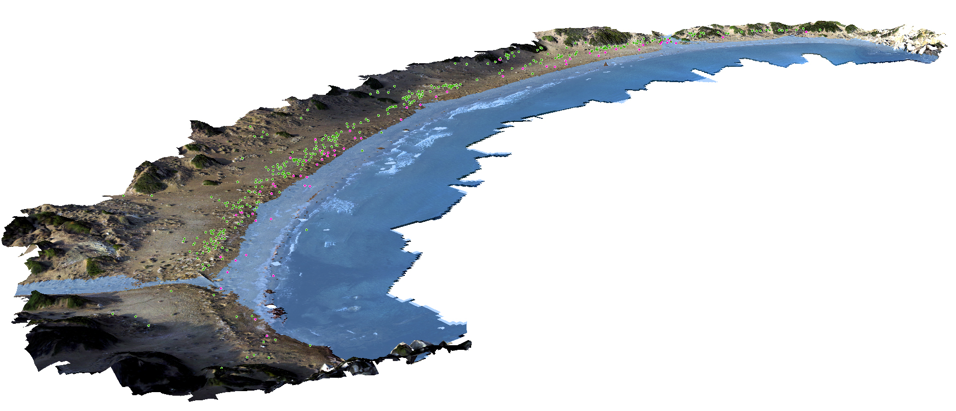 By stitching drone photos together through a process called photogrammetry, the researchers built 3D models of the coastline below. Green dots mark green turtle nests, pink dots mark loggerhead turtle nests.