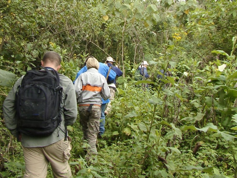 A group of eco-tourists hikes through Volcanoes National Park in Rwanda. Gorilla trekking has become a major source of revenue for Rwanda, and the closure of parks due to the pandemic has been an economic shock. Photo by Derek Keats via Flickr (CC BY 2.0).