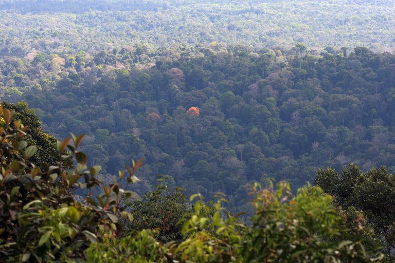 Rainforest in Suriname.