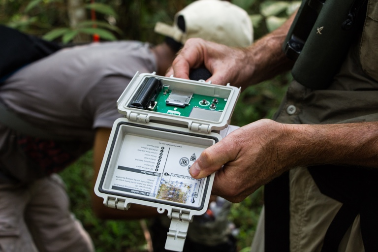 Eavesdrop on forest sounds to effectively monitor biodiversity