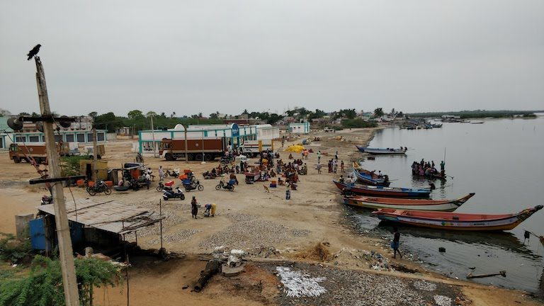 A fish auction center on the banks of Pulicat Lake, near the city of Chennai, Tamil Nadu, India, serves as spot for landing and maintaining boats, sorting and selling fish, and other activities. Image by Mahima Jain.