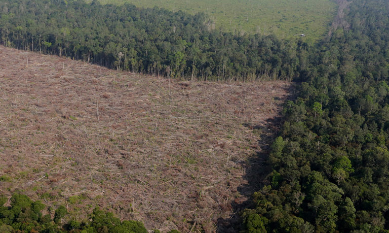 Palm oil companies continue to criminalize farmers in Sumatra (commentary)