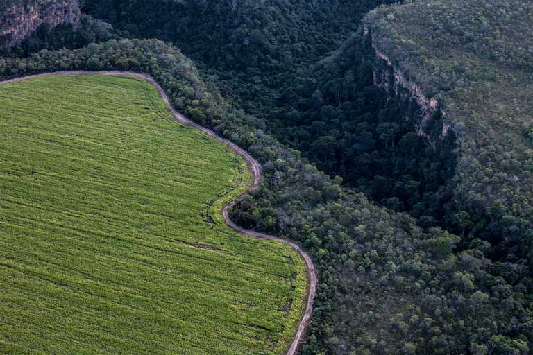 Brazilian Hunger For Meat Fattened On Soy Is Deforesting The Cerrado