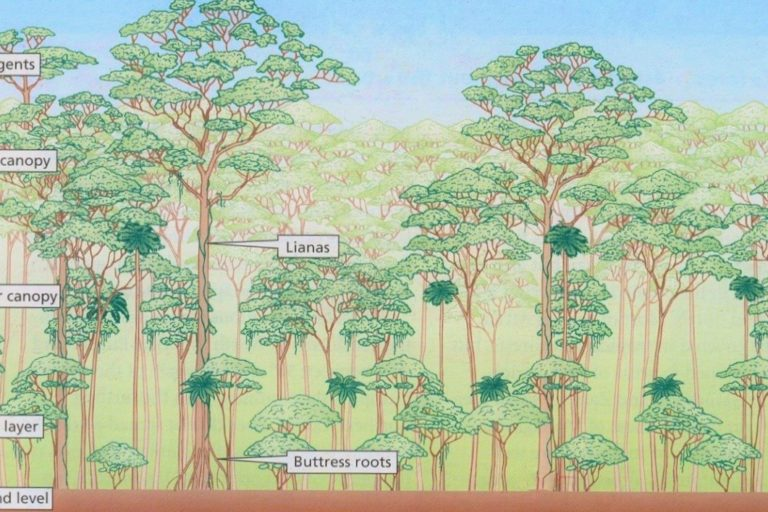 New space lasers offer best 3D look at global forests yet