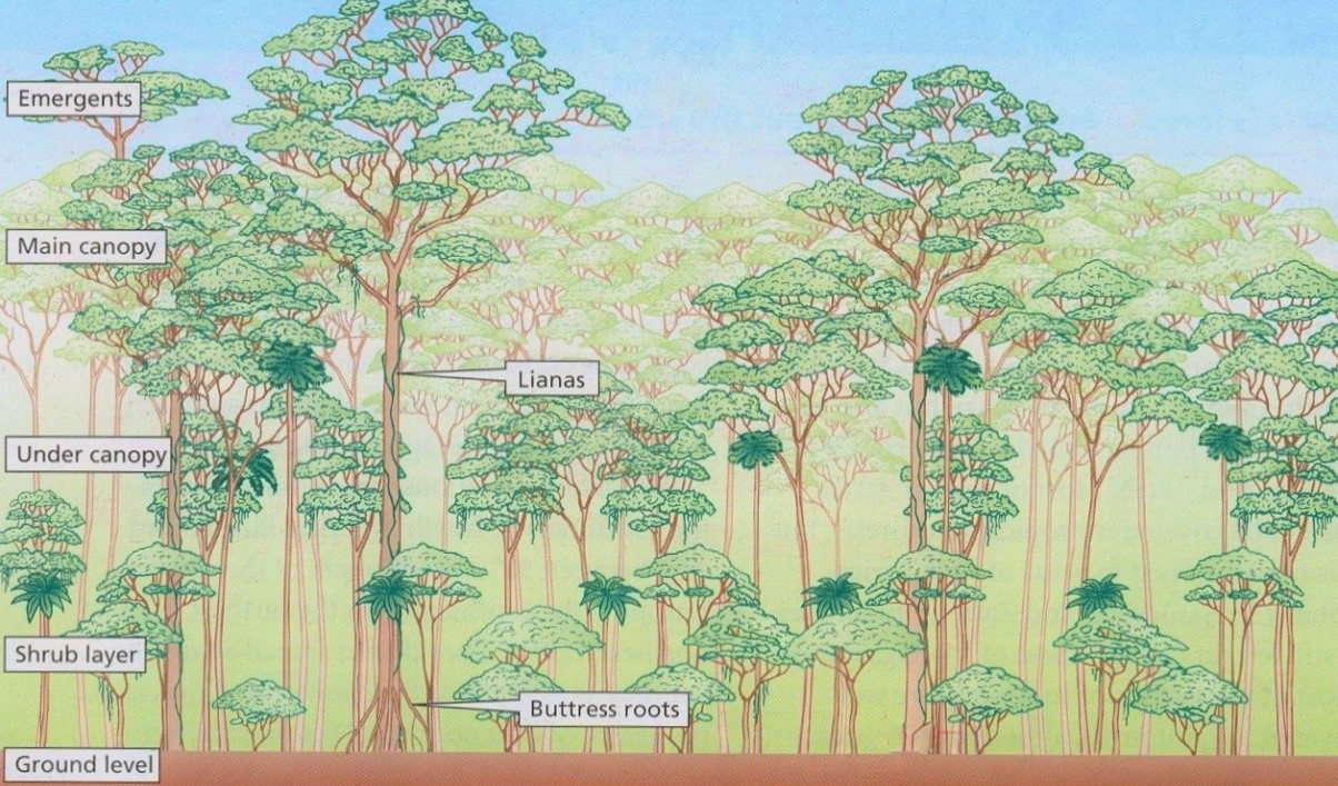 Powerful lidar sensors, such as those mounted on GEDI, can record layers of vegetation structure even in dense tropical rainforests.