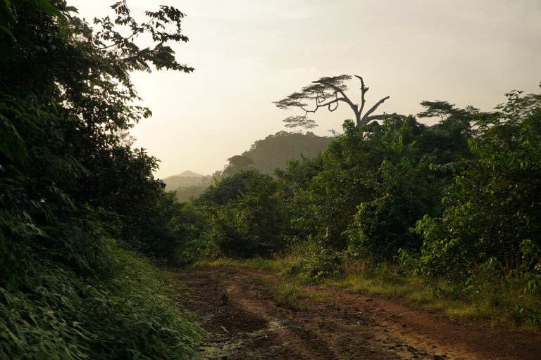 A forest in Liberia. Photo by Ashoka Mukpo.