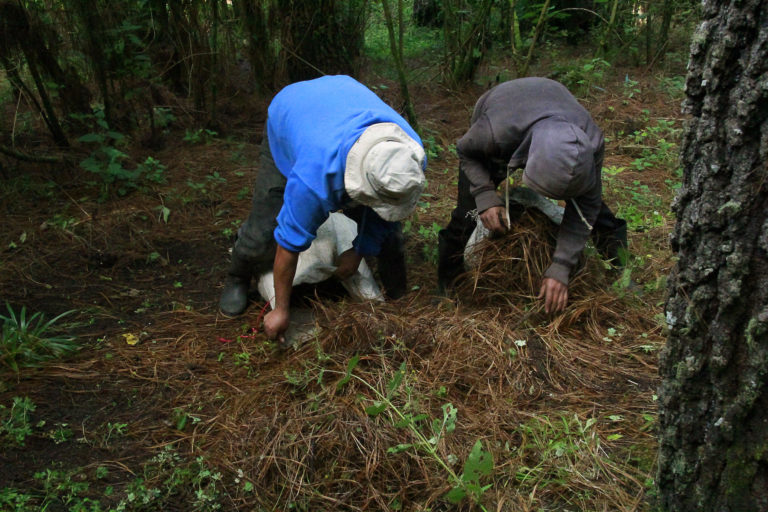 Farmworkers gather leaf litter in Kum Kum Wutz park for use as fertilizer. Image by Jorge Rodríguez for Mongabay.