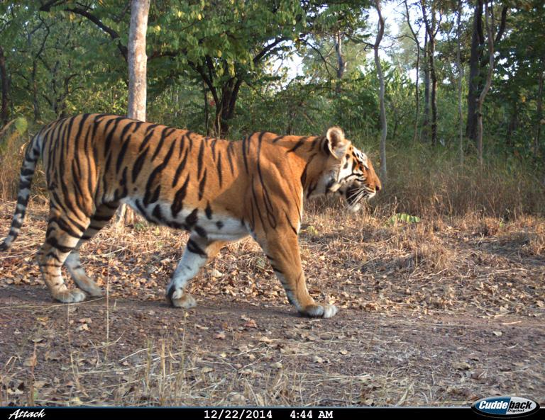 Hållbar urbanisering kan bli räddningen för Asiens tigrar