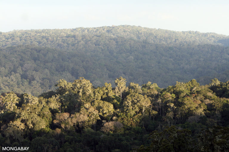 Tropical forest of the Loita Hills in Kenya