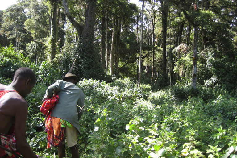 In search of medicinal plants in the Loita hills