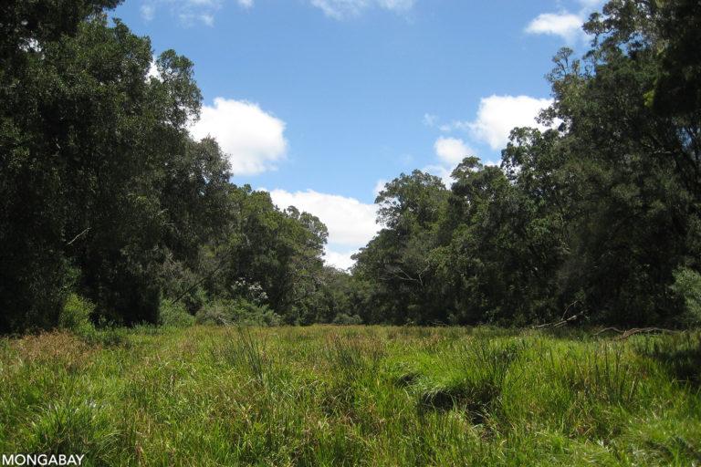 Loita hills forest meadow