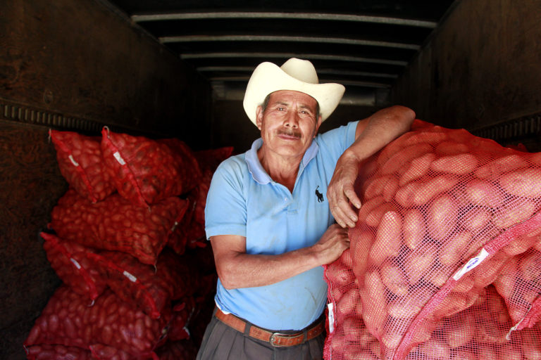 Toribio Cabrera, a potato farmer in Concepción Chiquirichapa, Guatemala. Like most of his coleagues, Cabrera attributes the success of the local potato harvest to the use of leaf litter from the forest as a fertilizer. Image by Jorge Rodríguez for Mongabay.