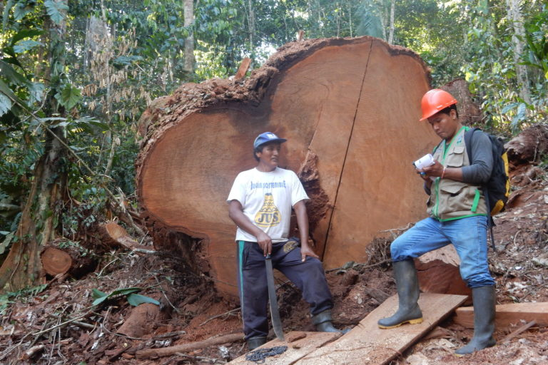 Inspectors supervise loggers in the forests of Peru. Photo courtesy of OSINFOR.