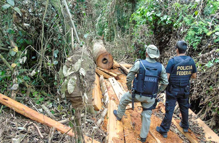 IBAMA, Brazil's environmental regulatory agency, and Federal Police investigate illegal logging in the Arara Indigenous Reserve in Pará state. IBAMA, which saw its budget slashed by half under President Temer, is increasingly unable to respond to indigenous reserve invasions. Image courtesy of IBAMA.