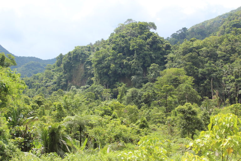 What the Congo Basin can learn from Filipino community forestry laws (commentary)
