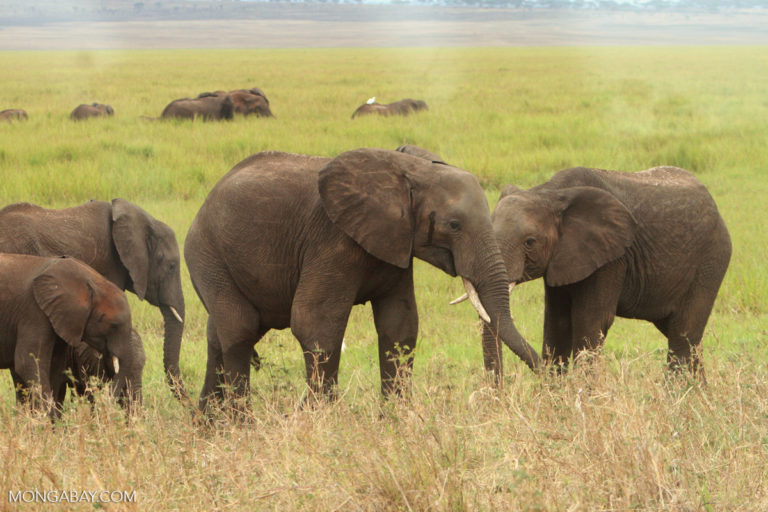 Bid to allow sale of ivory stockpiles rejected at wildlife trade summit