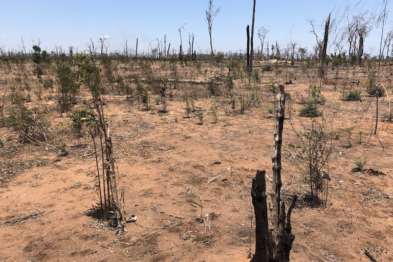 Deforested land north of Lambokely village, inside a strict conservation zone in Menabe Antimena Protected Area. Image by Emilie Filou.