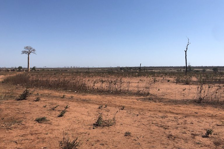 The burned remains of a former forest stretch to the horizon near Lambokely village. Image by Emilie Filou for Mongabay.