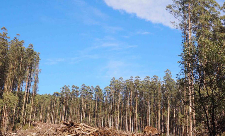 Forest soils take longer to recover from fires and logging than previously thought