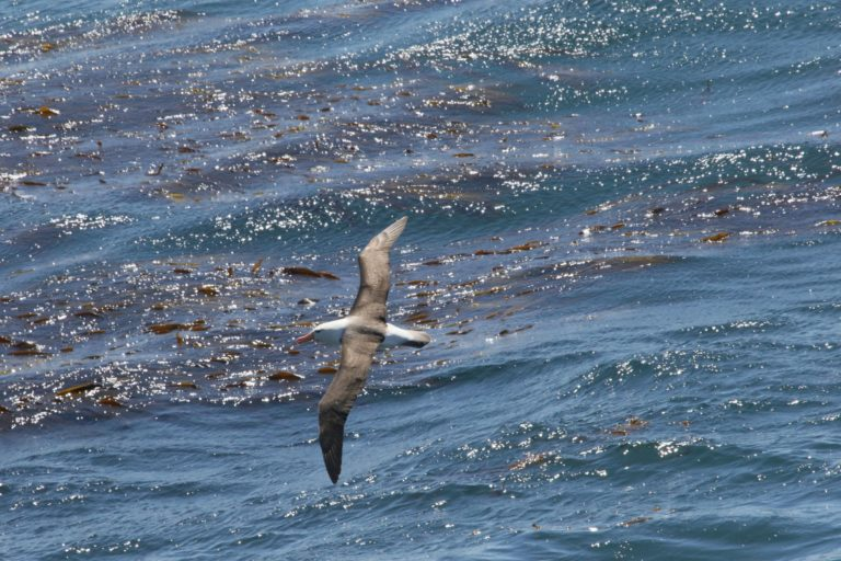 AI and public data identifies fishing behavior to protect hungry seabirds
