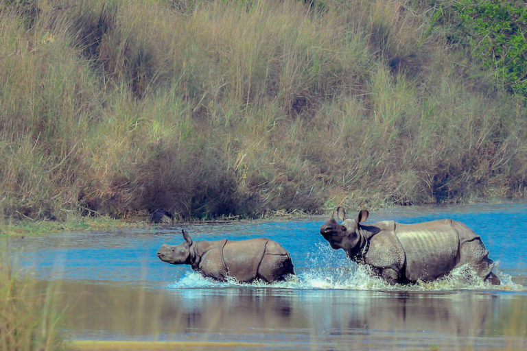 Nepal, in a bid to create a new rhino population, pauses to