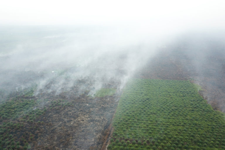 Smoke from fires burning on drained peatlands cleared for oil palm in East Kalimantan, Indonesia in 2018. Photo courtesy of Linus.