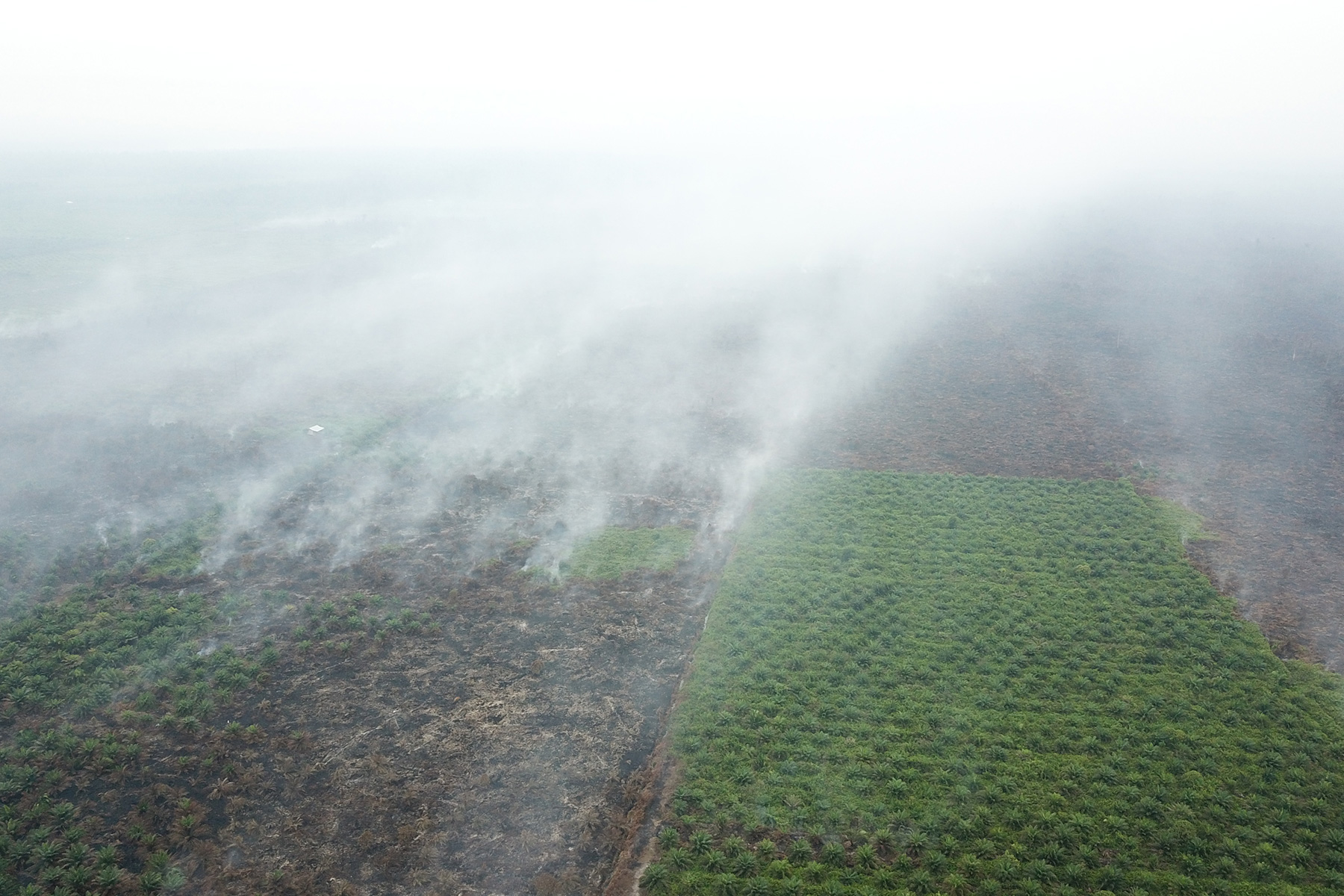 Malaysia to ban oil palm expansion?1800 x 1200 jpeg 622kB