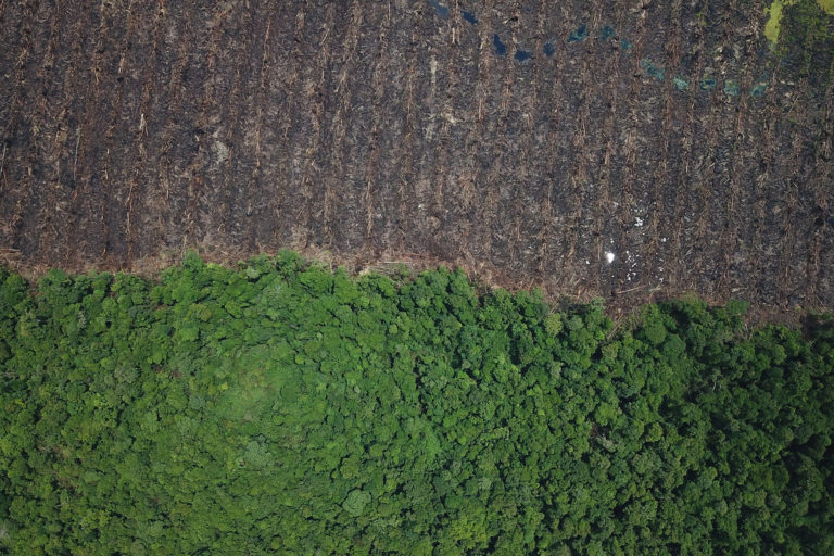 Peatlands drained and cleared for oil palm in East Kalimantan, Indonesia in 2018. Photo courtesy of Linus.