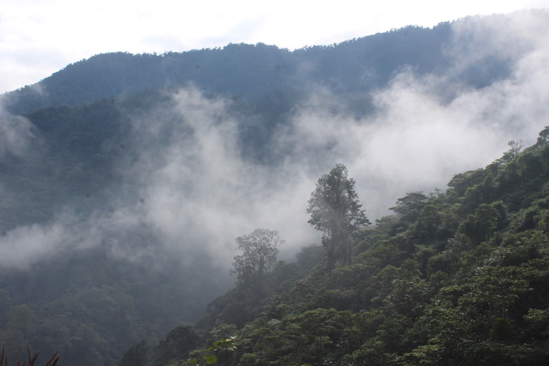 Because Cerro Amay is a cloud forest, it exists in a near-constant fog. Image by Max Radwin for Mongabay.