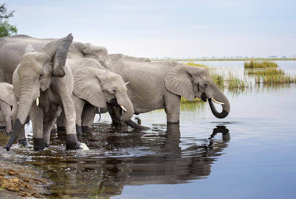 https://imgs.mongabay.com/wp-content/uploads/sites/20/2019/03/04222619/Botswana-Elephants-Linyanti-Drinking-Herd.jpg