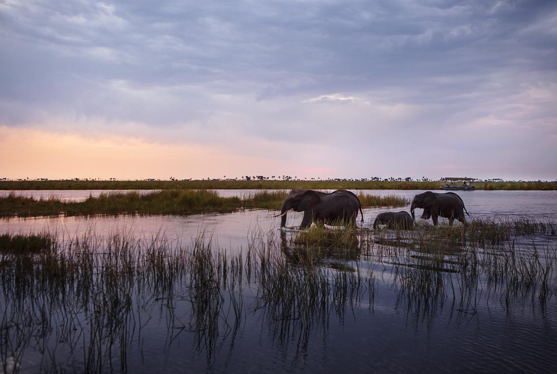 Trouble in Botswana's elephant paradise as poaching said to rise