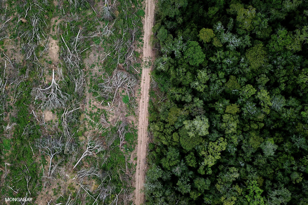 Drone view of Chiquitano forest recently deforested on the edge of the Bolivian Amazon for soy production. Photo by Rhett A. Butler for Mongabay.