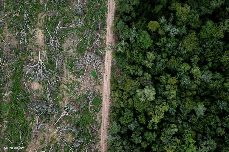 Drone view of Chiquitano forest Deforestation in the Bolivian Amazon for soy production. Photo credit: Rhett A. Butler for Mongabay.