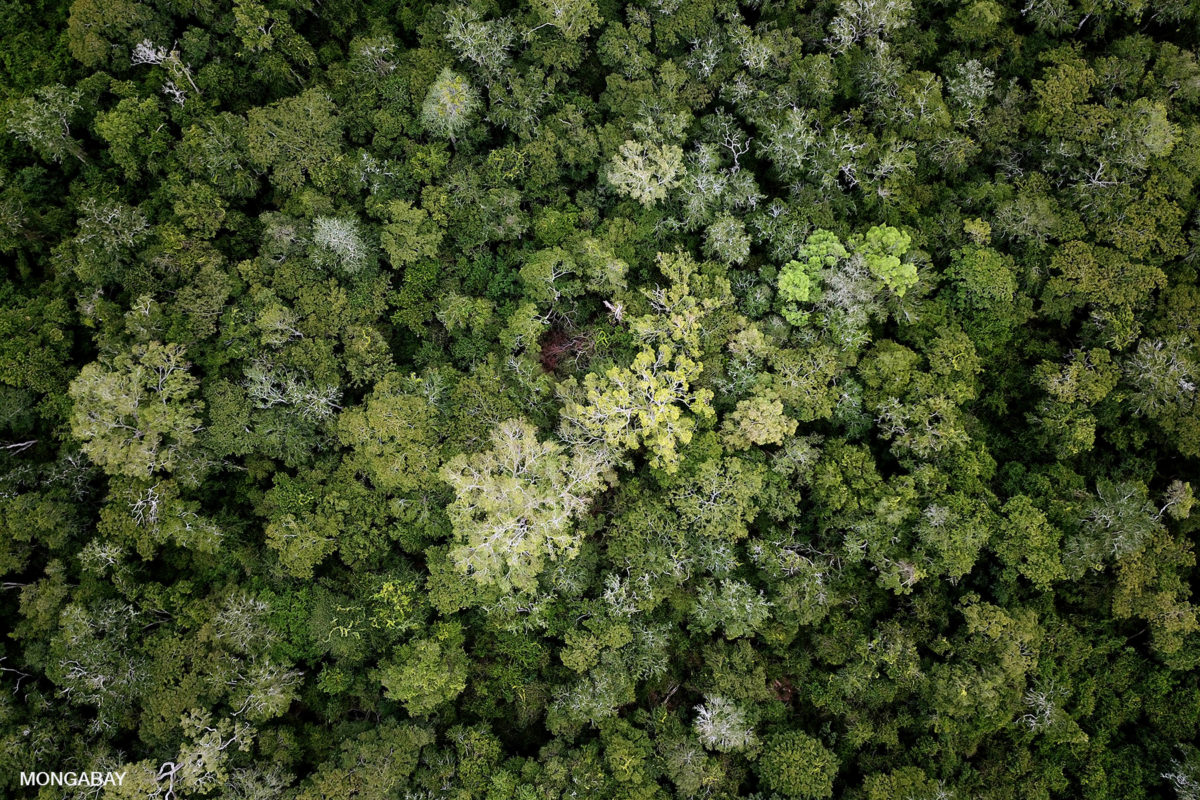 Forest in the Bolivian Amazon. Photo by Rhett A. Butler for Mongabay.