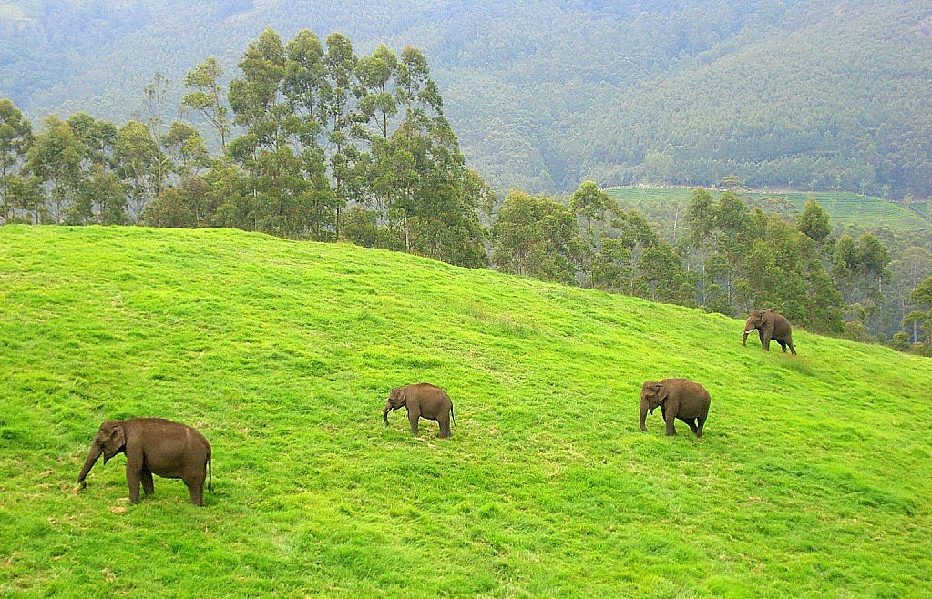 Reducing human-elephant encounters with calls, texts, and