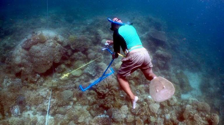 Reef-monitoring-%C2%A9-Joal-Ascalon-SEA-Institute-VIP