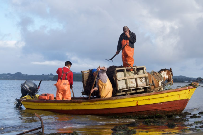 Chilean law pits indigenous people against salmon industry