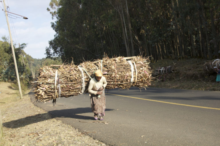 Generations of women have carried wood from Entoto Mountain to fuel the stoves of Addis Ababa, Ethiopia. Photo by Christopher Lett/Mongabay.