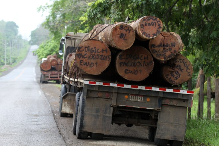Flatbed trucks haul logs out of Darién. Image by David Mesa for Mongabay.