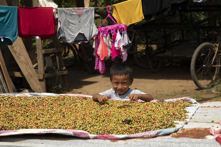 A child plays with coffee beans drying in the sun in Puerto Indio. Image by Alexander Arosemena for Mongabay.
