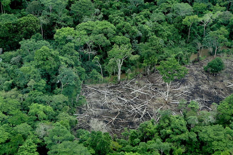 A small deforested site in Darién. Illegal loggers reach remote areas like this one by river. Micro devastations add up, and reach Darién National Park. Image by David Mesa for Mongabay.