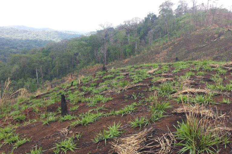Devastation is visible just about everywhere in the Darién Gap. Invaders use fire as a tool to appropriate land. In the most recent dry season, more than 166 fires were reported in the region. Image by Alexander Arosemena for Mongabay.