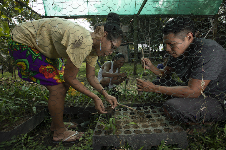Raquel Cunapio and others plant seedlings to regenerate the forest. Image by Alexander Arosemena for Mongabay.