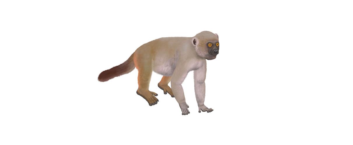 Human population boom led to Madagascar's megafauna