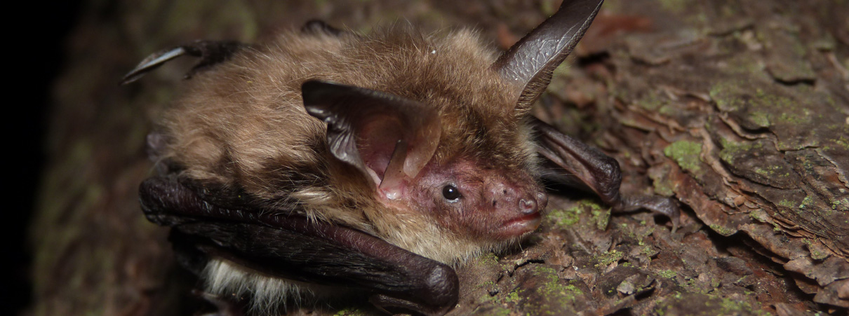 Evidence For Ways To Conserve Bats Commentary