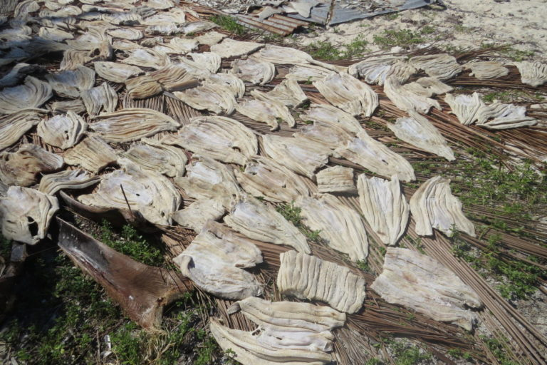 Salted shark meat, called cecina, drying in the sun. Image courtesy of MarAlliance.